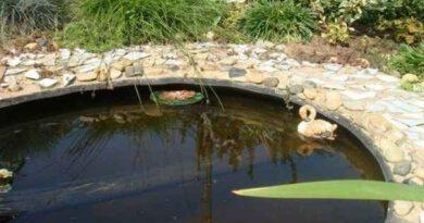 Как из обычной покрышки сделать красивый мини-пруд?