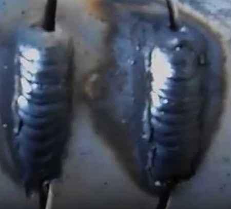 Как быстро научиться варить потолочный шов электродом